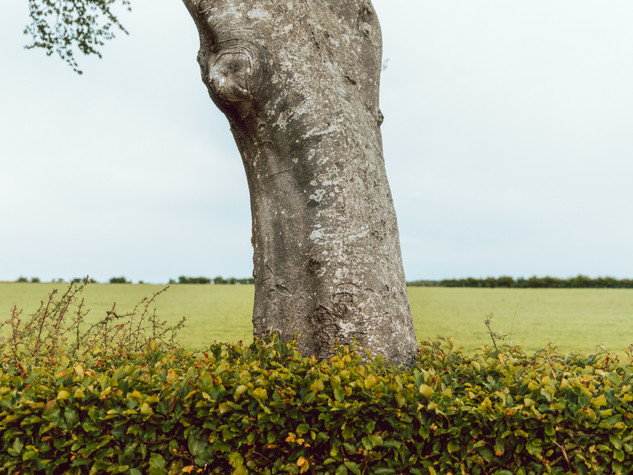Tree Form 3000px 22.jpg