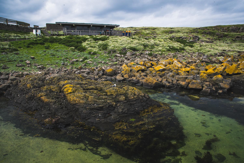 Isle of May NO WMK 1500px 103.jpg