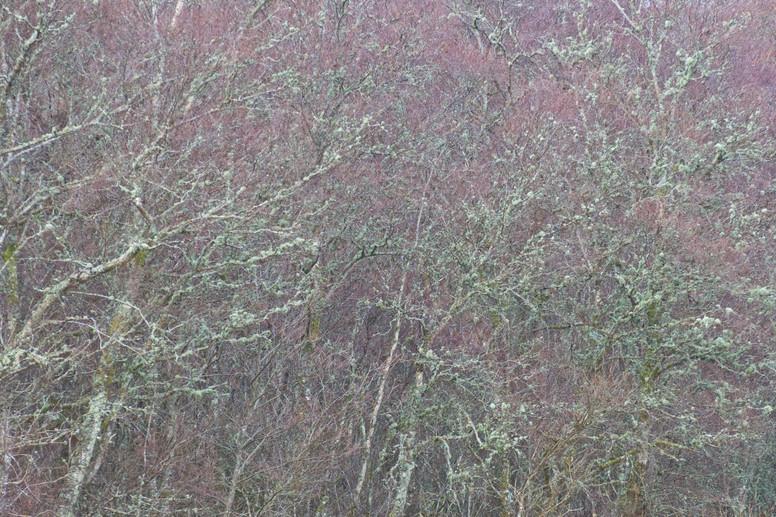 Birchscape.jpg