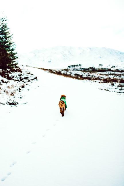 Finlas Forest Feb 2020 1500px 9.jpg