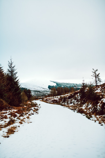 Finlas Forest Feb 2020 1500px 18.jpg