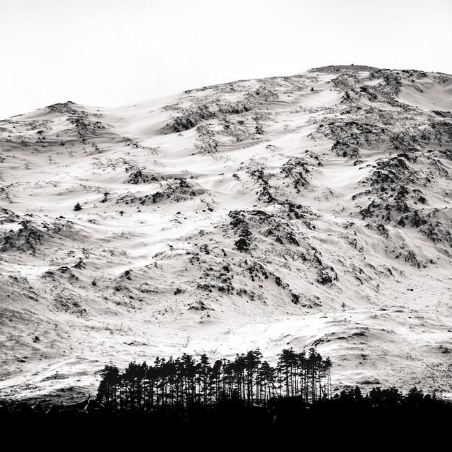 Finlas Forest Feb 2020 1500px 5.jpg