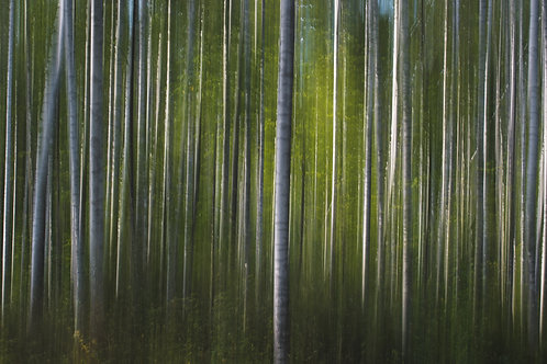 A Latvian Forest