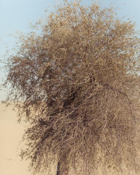 Al Qudra Desert 3000px 4.jpg