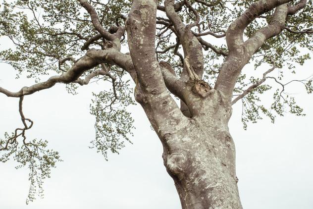 Tree Form 2021 Edits 9.jpg