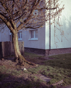 Tree Form 2021 Edits 1-2.jpg