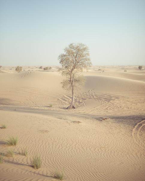 Al Qudra Desert 3000px 5.jpg