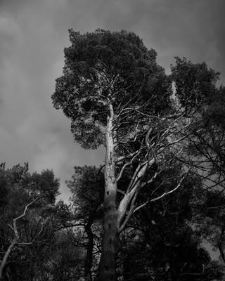 Tree Form 2021 Edits 6.jpg