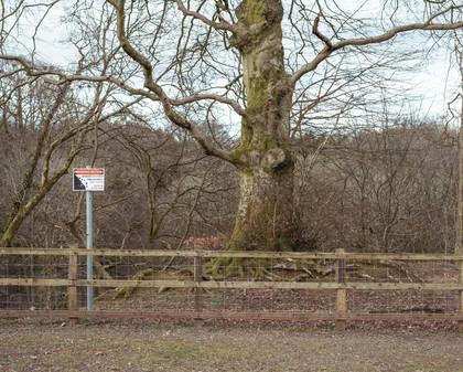 Tree Form 2021 Edits 2.jpg