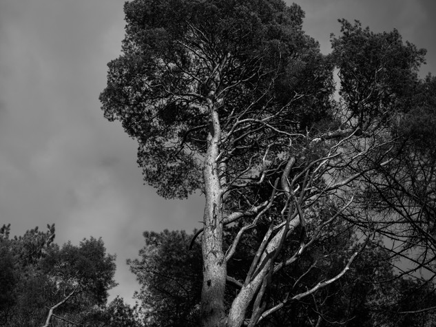 Tree Form 3000px 6.jpg