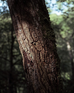 Tree Form 2021 Edits 2-2.jpg