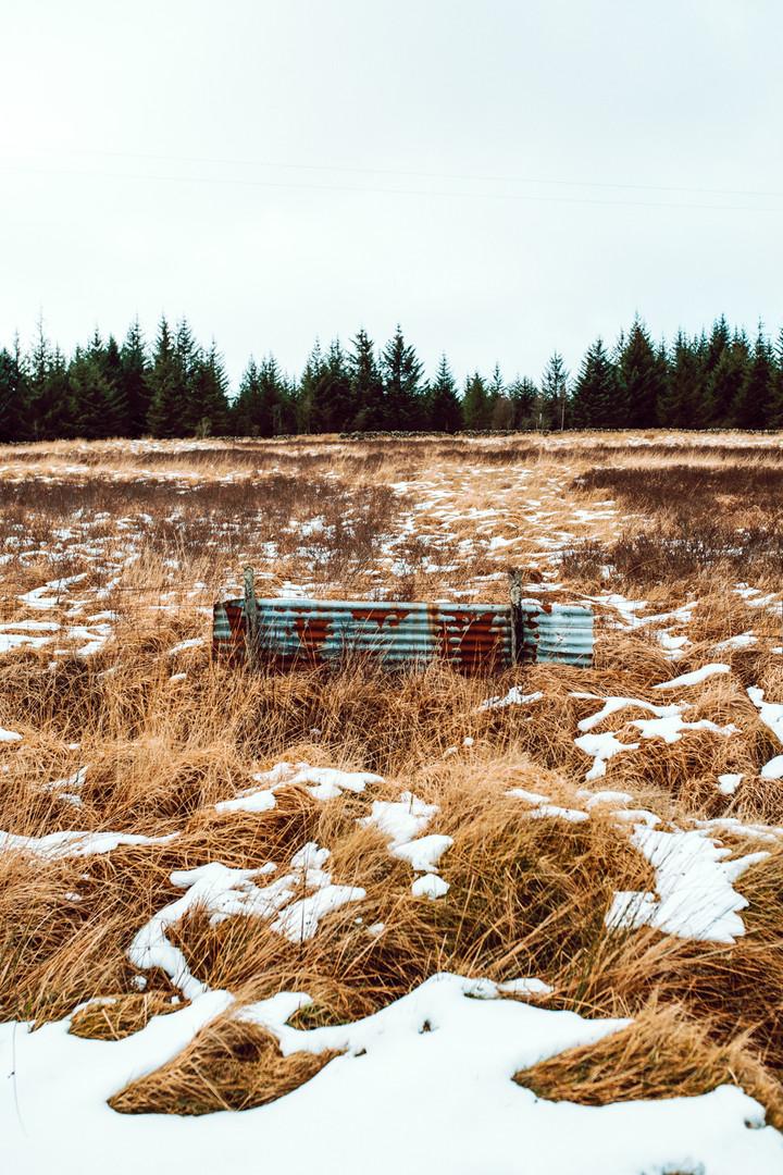 Finlas Forest Feb 2020 1500px 19.jpg