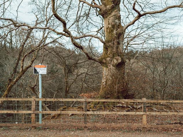 Tree Form 3000px 2.jpg