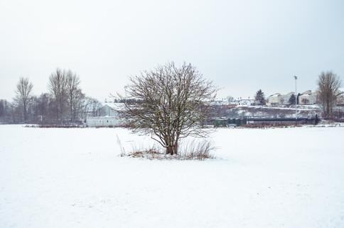 Snow Dean Park  2020 10.jpg
