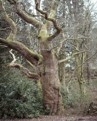 Tree Form 2021 Edits 3.jpg