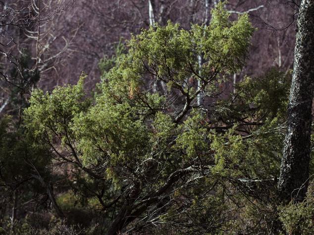 Cairngorms 1500px 1.jpg