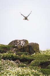 Isle of May NO WMK 1500px 100.jpg