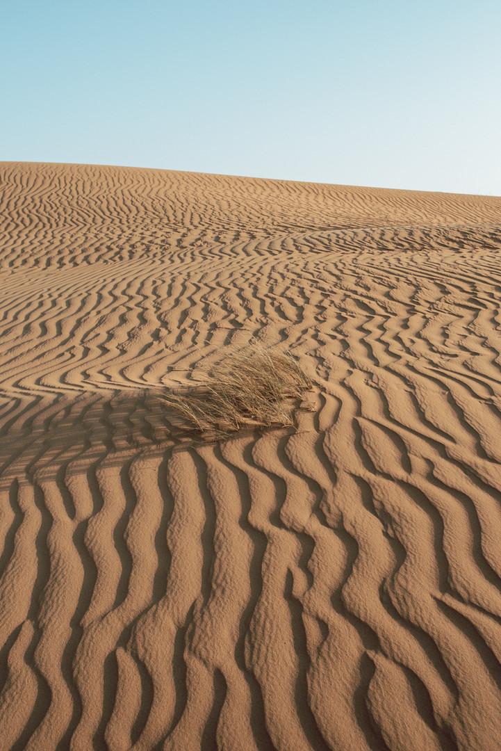 Dubai 2020 - 1500px 74.jpg
