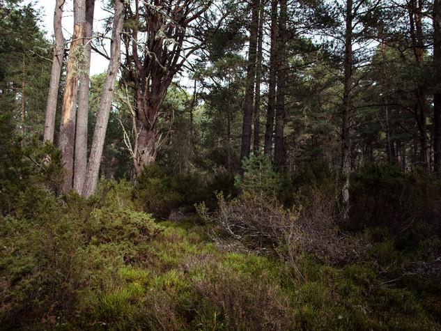 Cairngorms 1500px 1-2.jpg