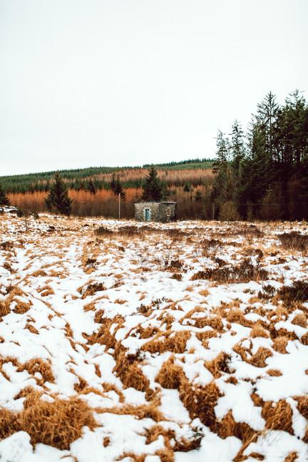 Finlas Forest Feb 2020 1500px 24.jpg