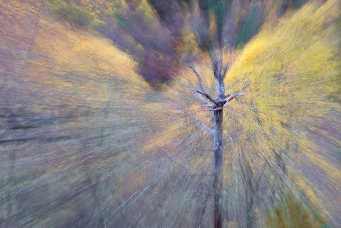 Glen Affric Autumn Burst.jpg