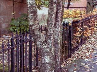 Glasgow West End 3000px 5.jpg