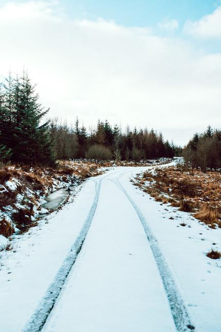 Finlas Forest Feb 2020 1500px 2.jpg