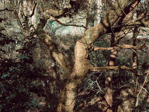 Tree Form 3000px 1.jpg