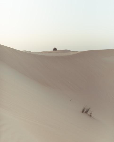Al Qudra Desert 3000px 6.jpg