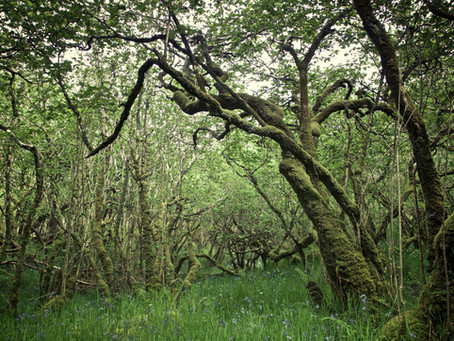 The Rainforests of the UK