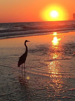 Heron sunset.jpg