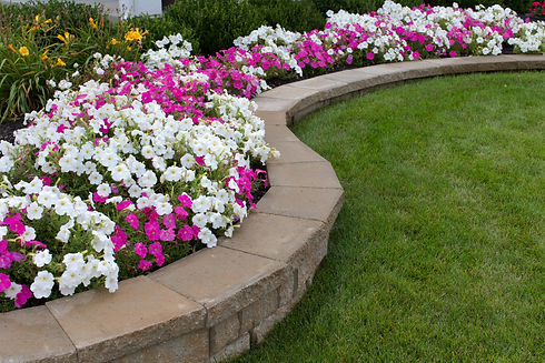 Pink and White petunias on the flower be