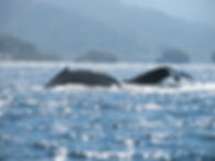 CH.16 - Whales - two - Our Shot .jpg