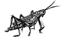 Grasshopper_Art_Jul2020.jpg