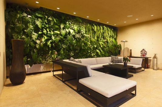 renovar energia con plantas en el hogar