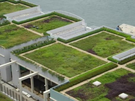 Techo Verde Arquitectura y medio ambiente