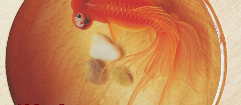 How to Do A Bubble-eyed Goldfish Resin Painting