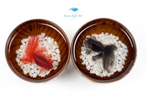 Moor Goldfish | 3D Resin Painting | Comes with Gift Box