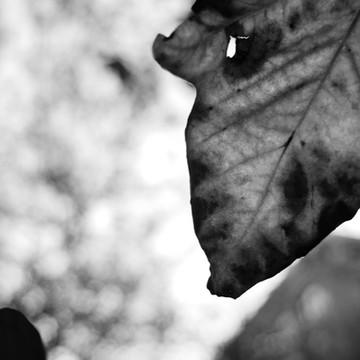 Autumn of Memory