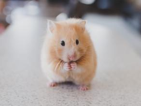 A hamster. A freezer. A hungry grandpa.