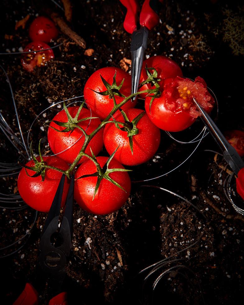 Plying Tomatoes