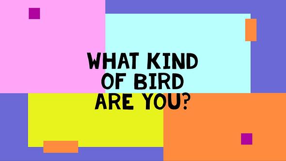 Title Bird.PNG