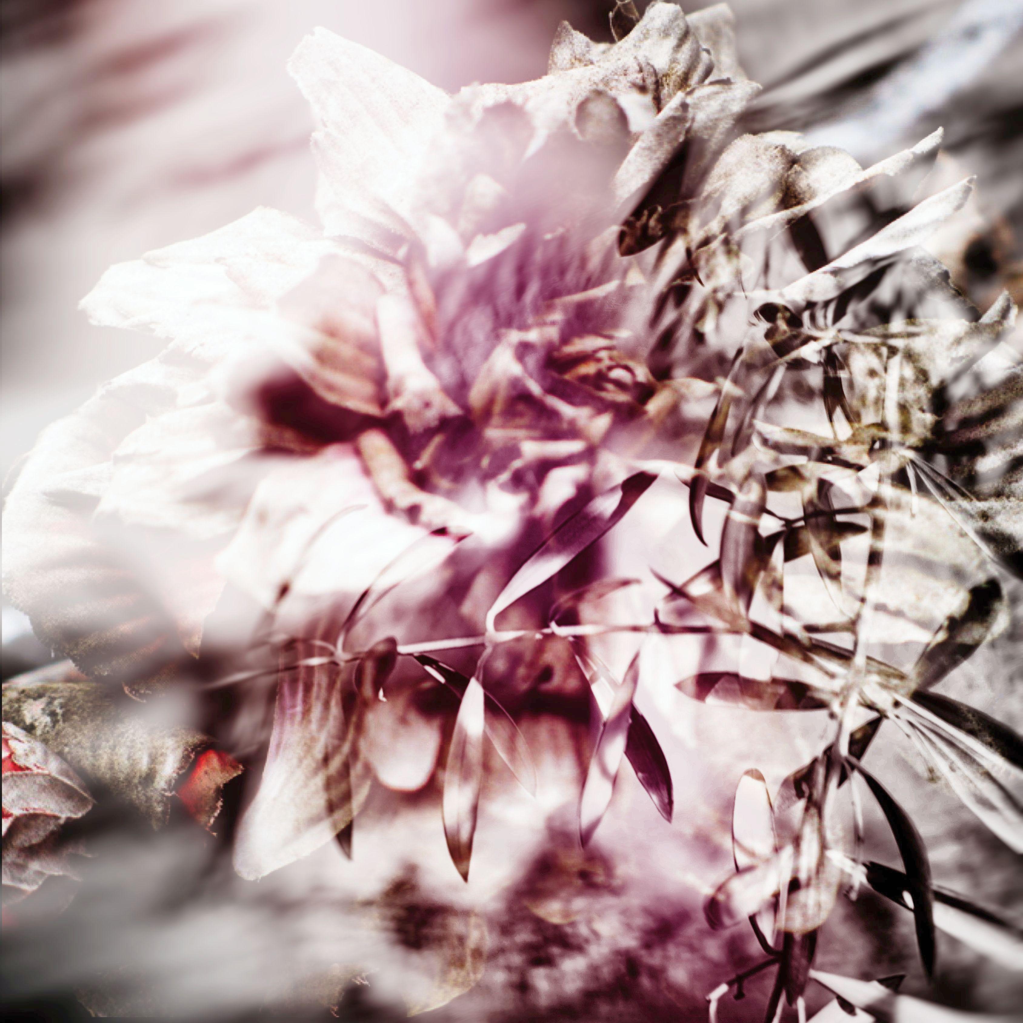 carre fleur:arbre
