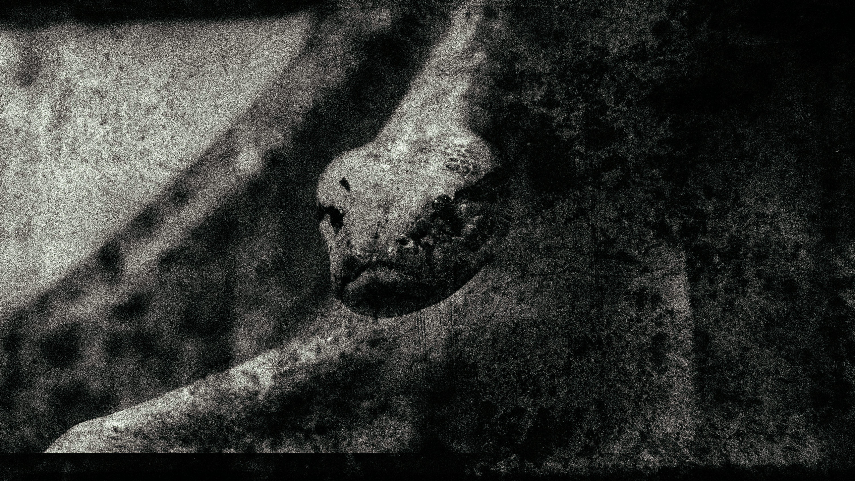 serpent-marbre