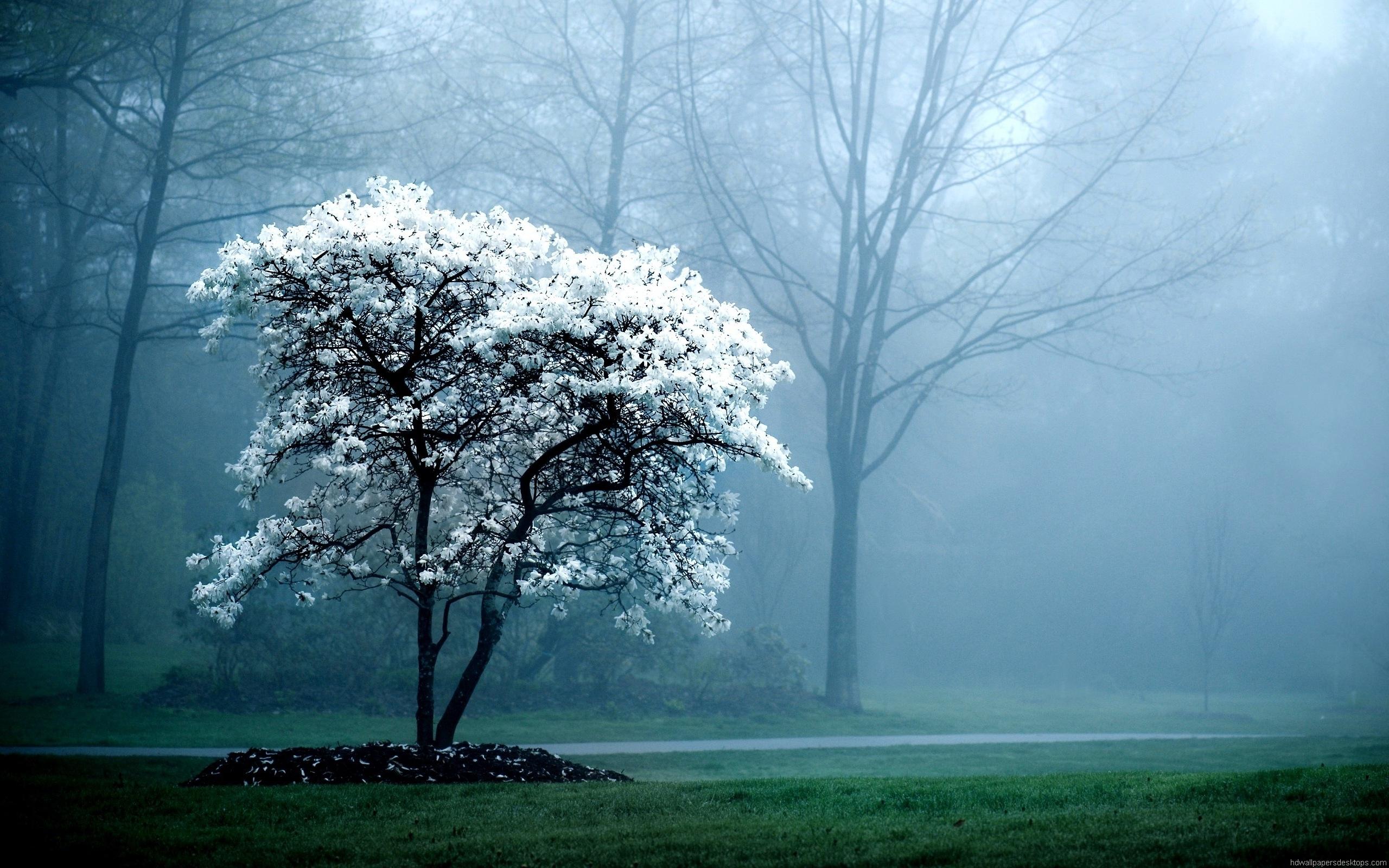 602523-desktop-foggy-morning