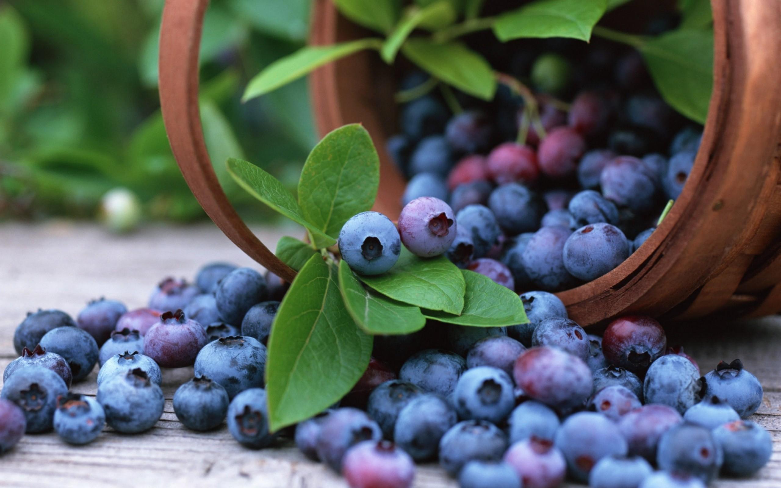 578815-blueberries