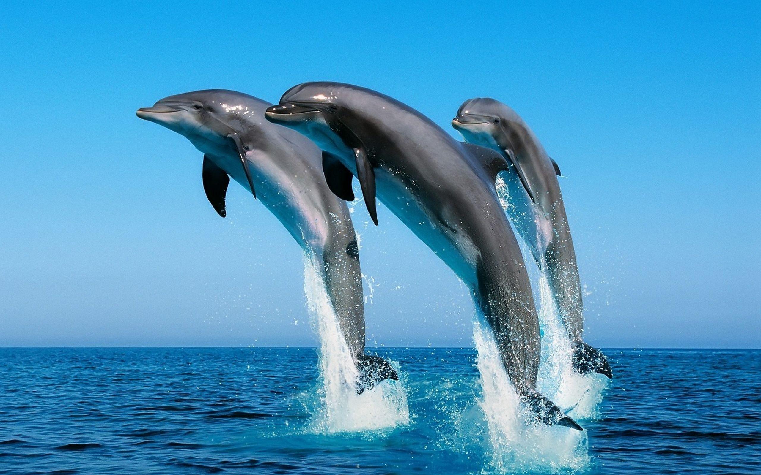604290-dolphin