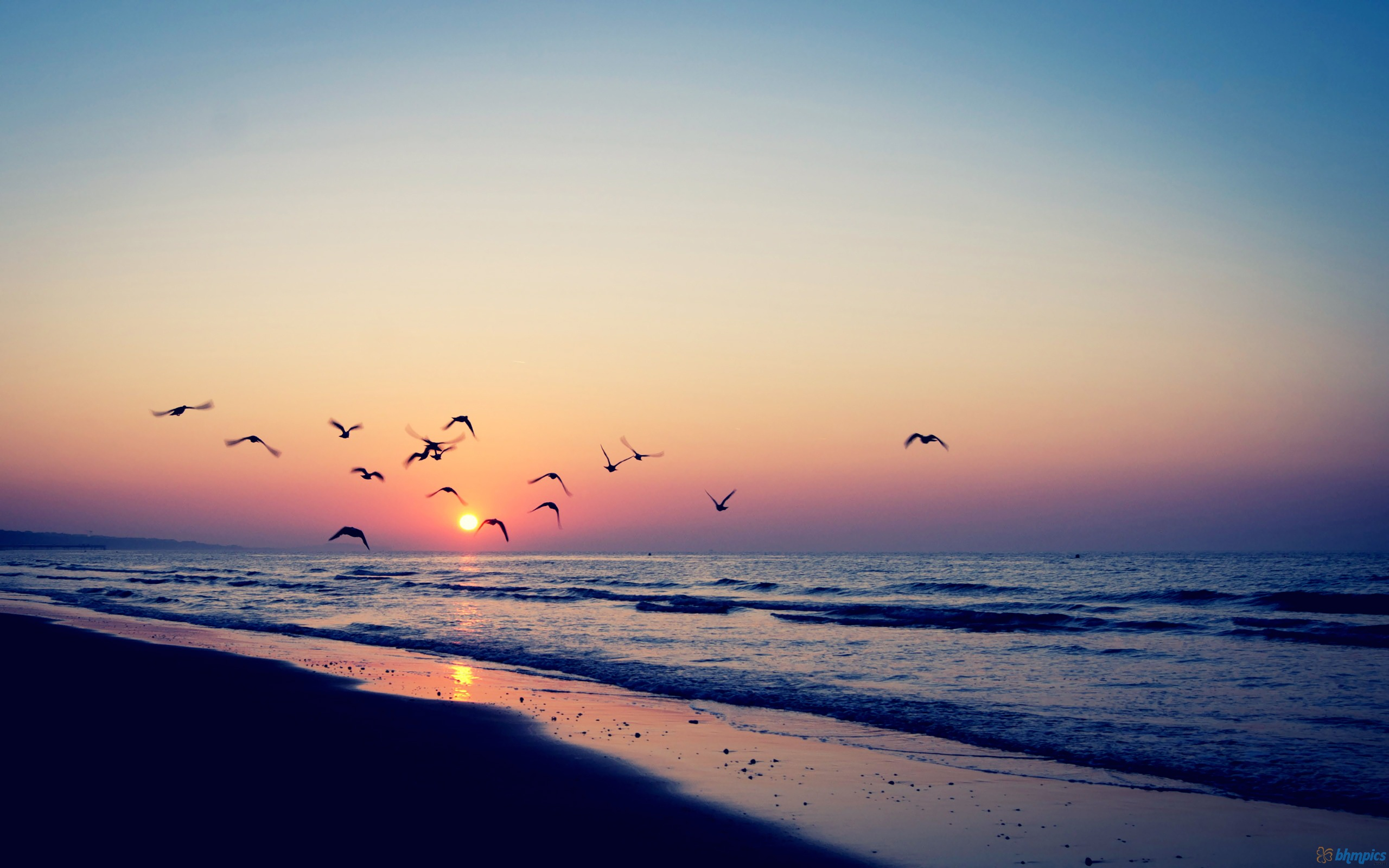 592875-birds-flying-at-sunset
