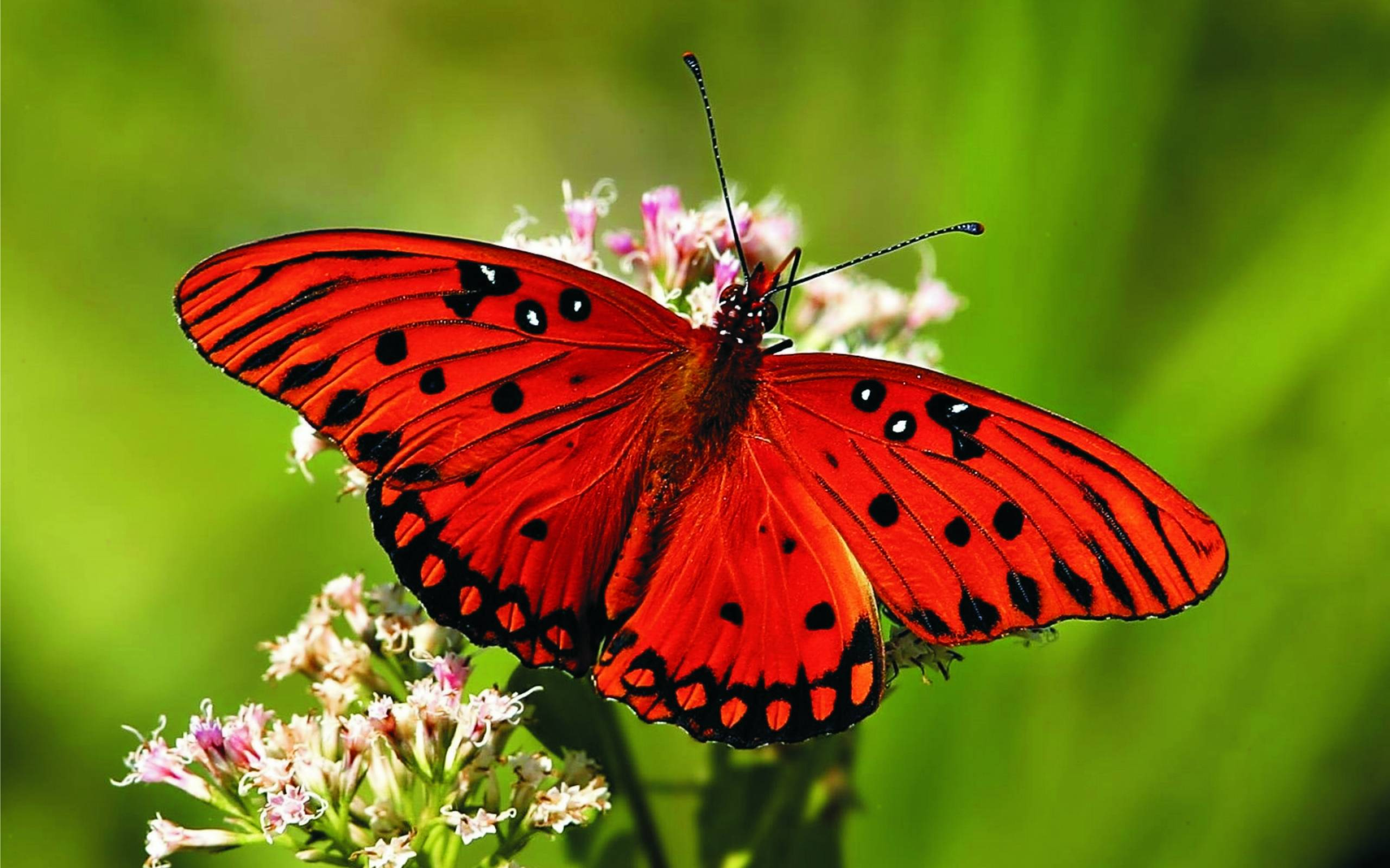 595468-red-butterfly