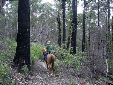 Riding through the dense forest in the hills around Judbury,
